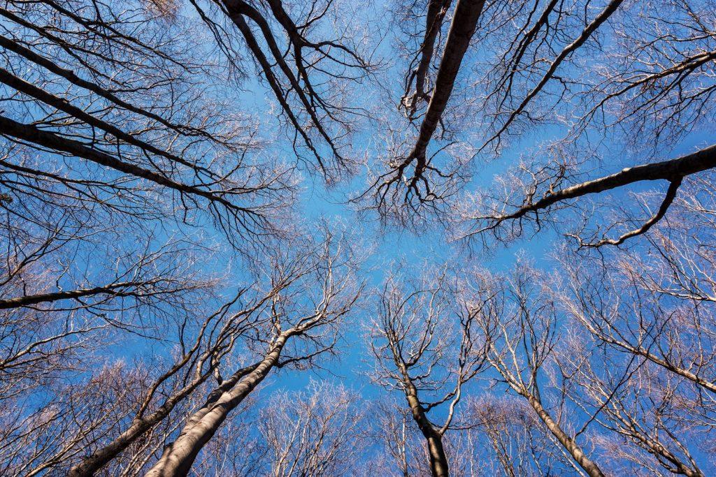 koruny_stromu01