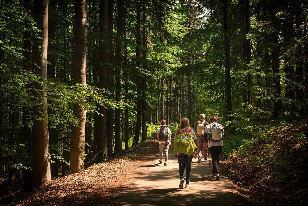 Putujme bez hranic - putování lesem